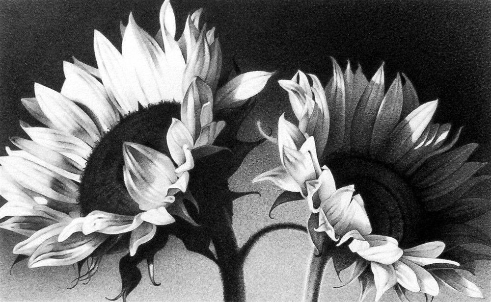 Hoa hướng dương tranh chì đẹp
