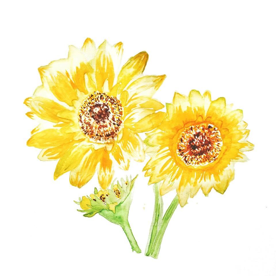 Những bức tranh bông hoa hướng dương đẹp
