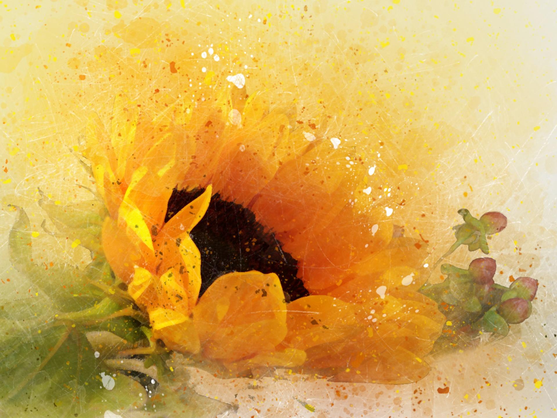 Sunflower Watercolor and Splatter