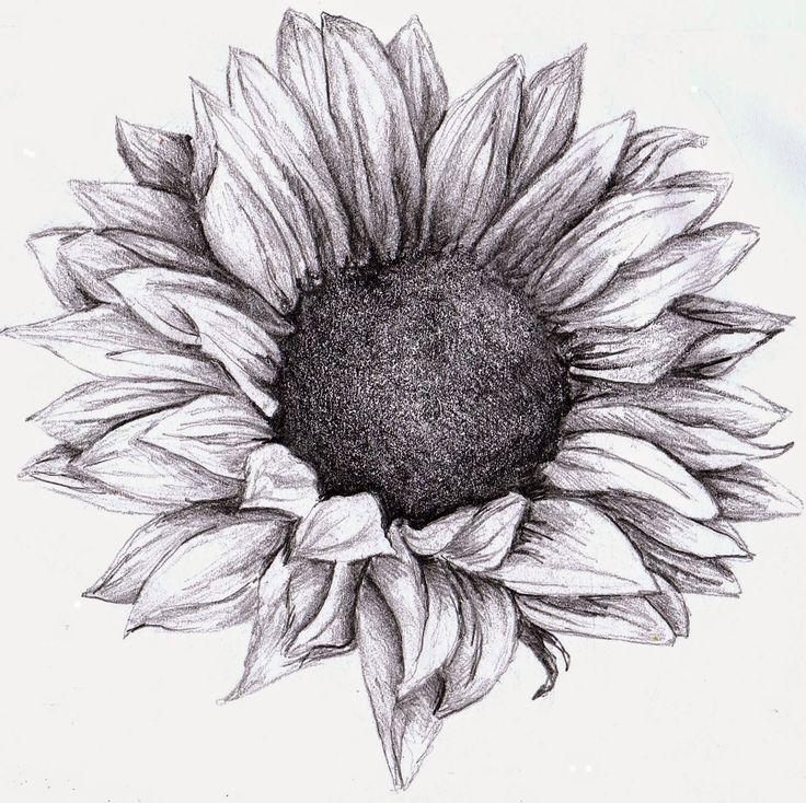 Tranh vẽ hoa hướng dương bằng chì đơn giản
