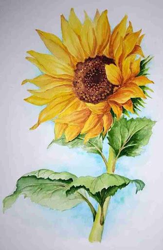 Tranh vẽ hoa hướng dương trong gió