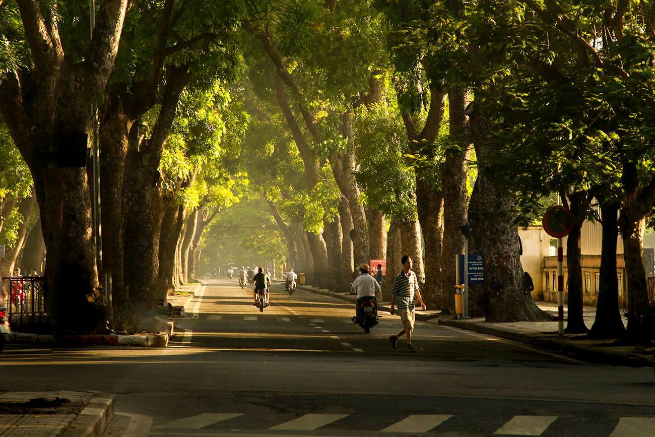 Hình ảnh Hà Nội phố nắng đẹp qua rặng cây
