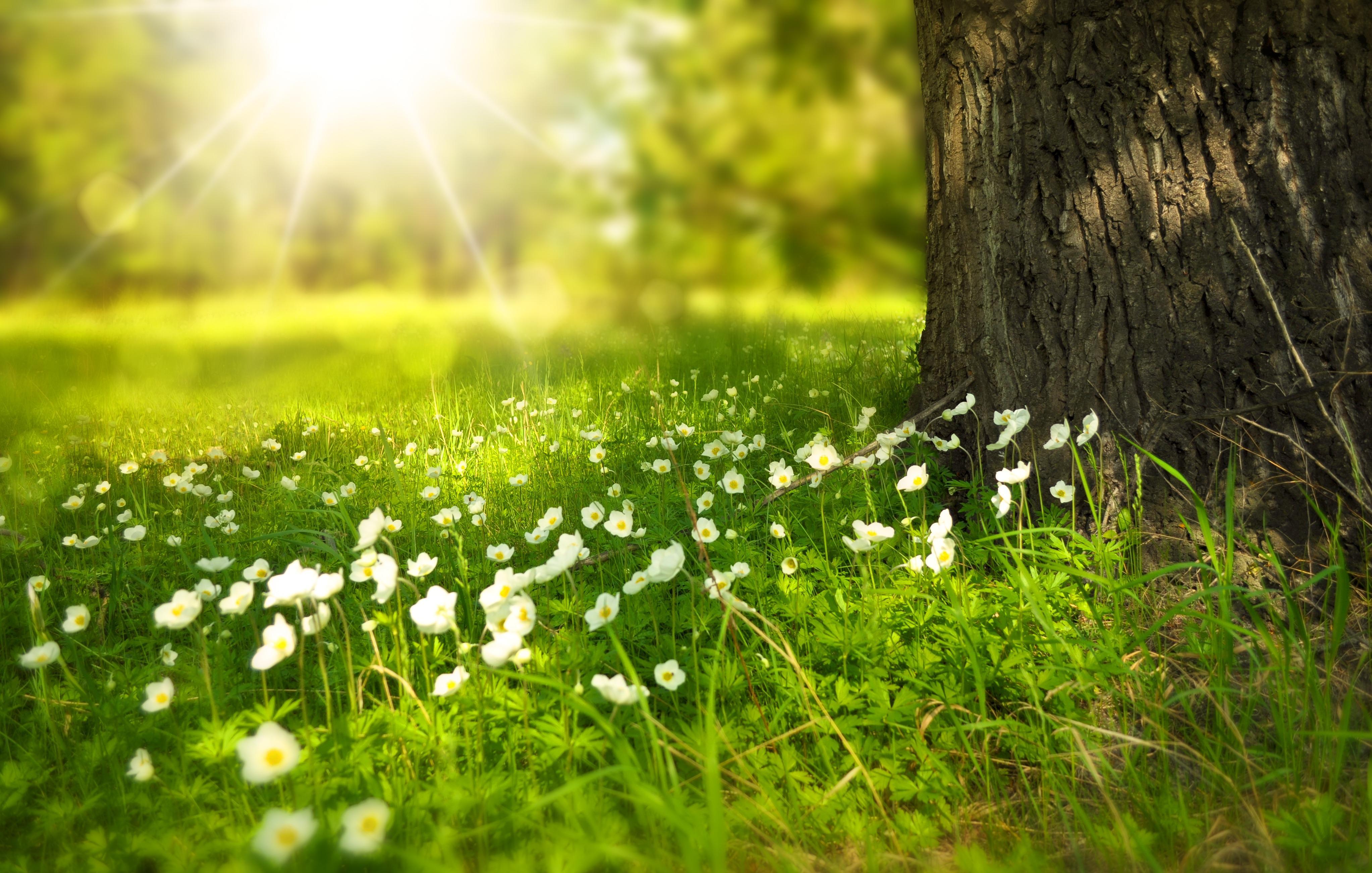Hình ảnh nắng đẹp trên đóa hoa trắng dưới gốc cây