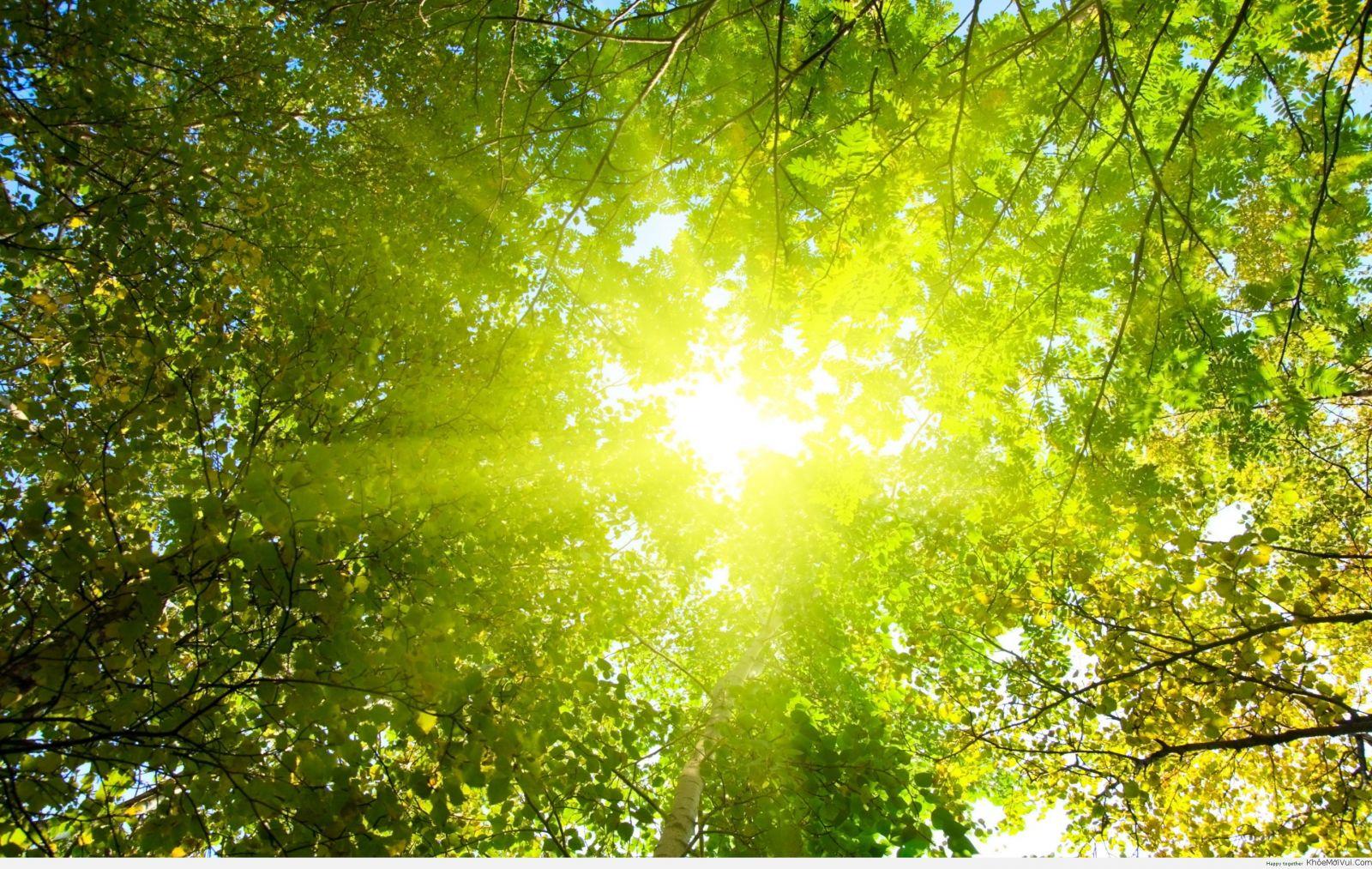 Hình ảnh nắng đi qua kẽ lá cây