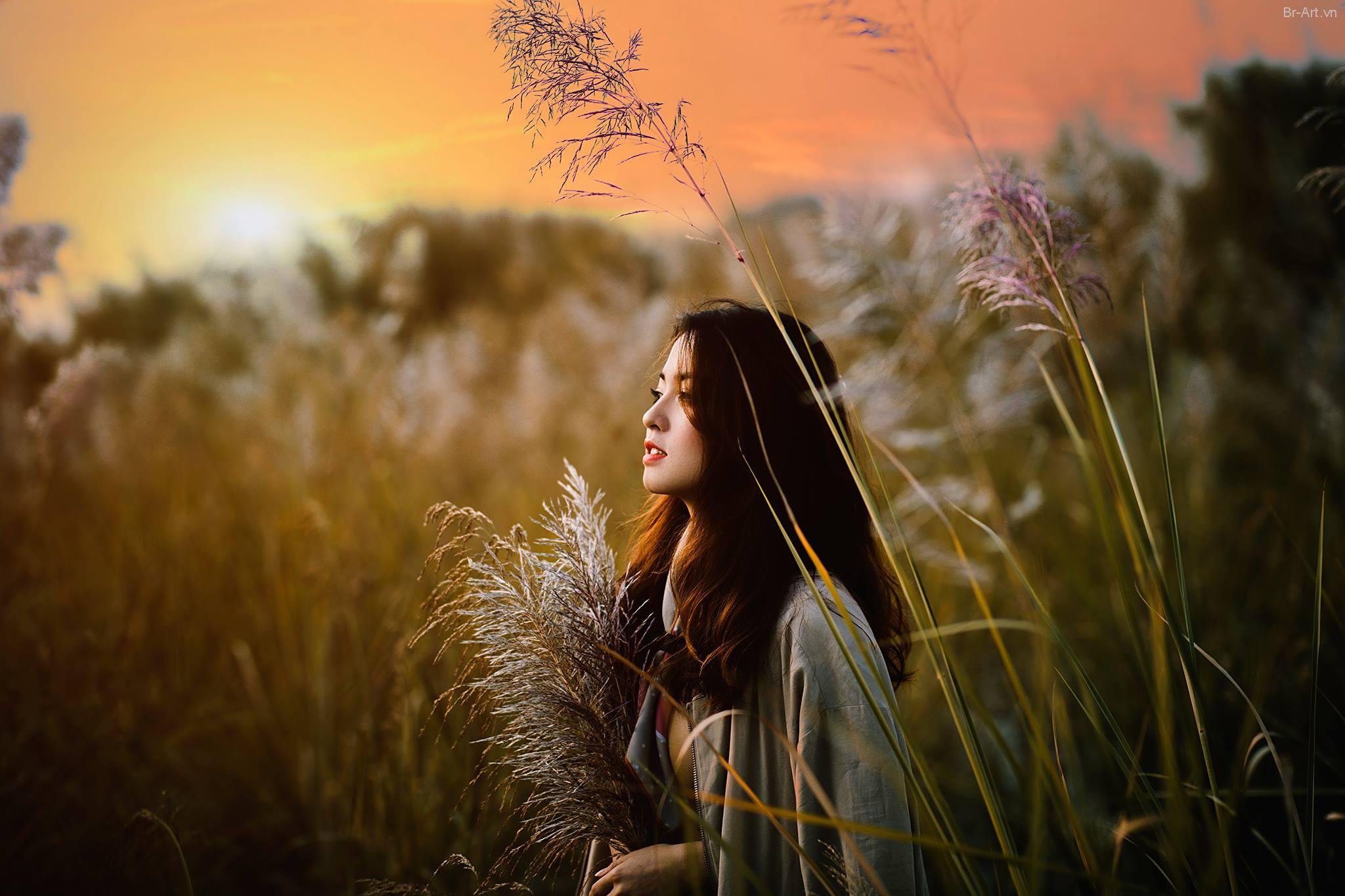 Hình ảnh nắng phủ trên cánh đồng cỏ