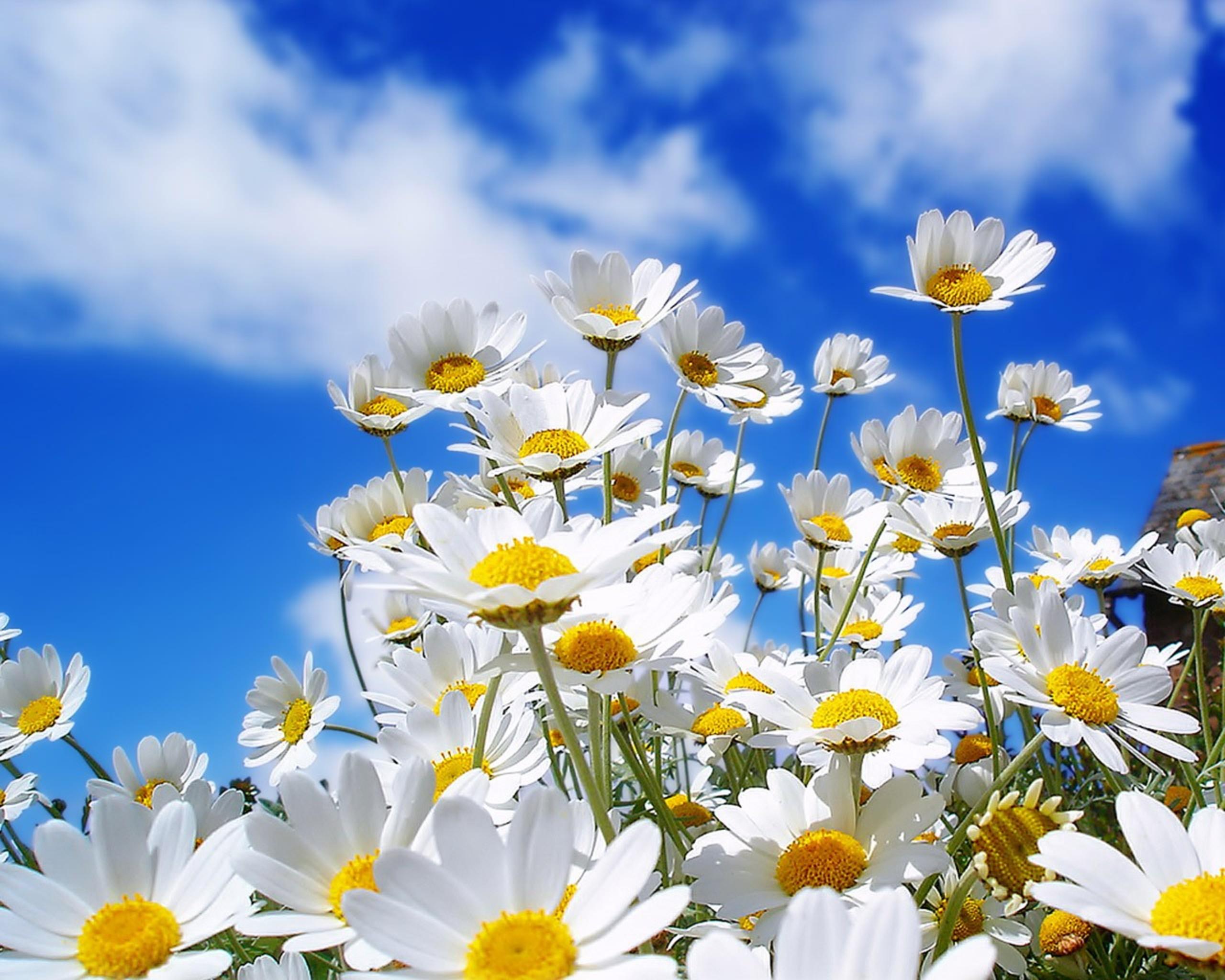 Hình ảnh trời nắng hoa trắng cực đẹp