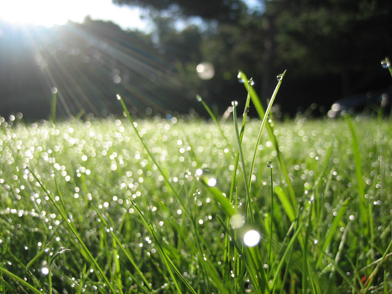 Trời nắng phủ xuống giọt sương trên lá cỏ