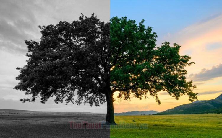 Cách chuyển ảnh màu sang đen trắng online