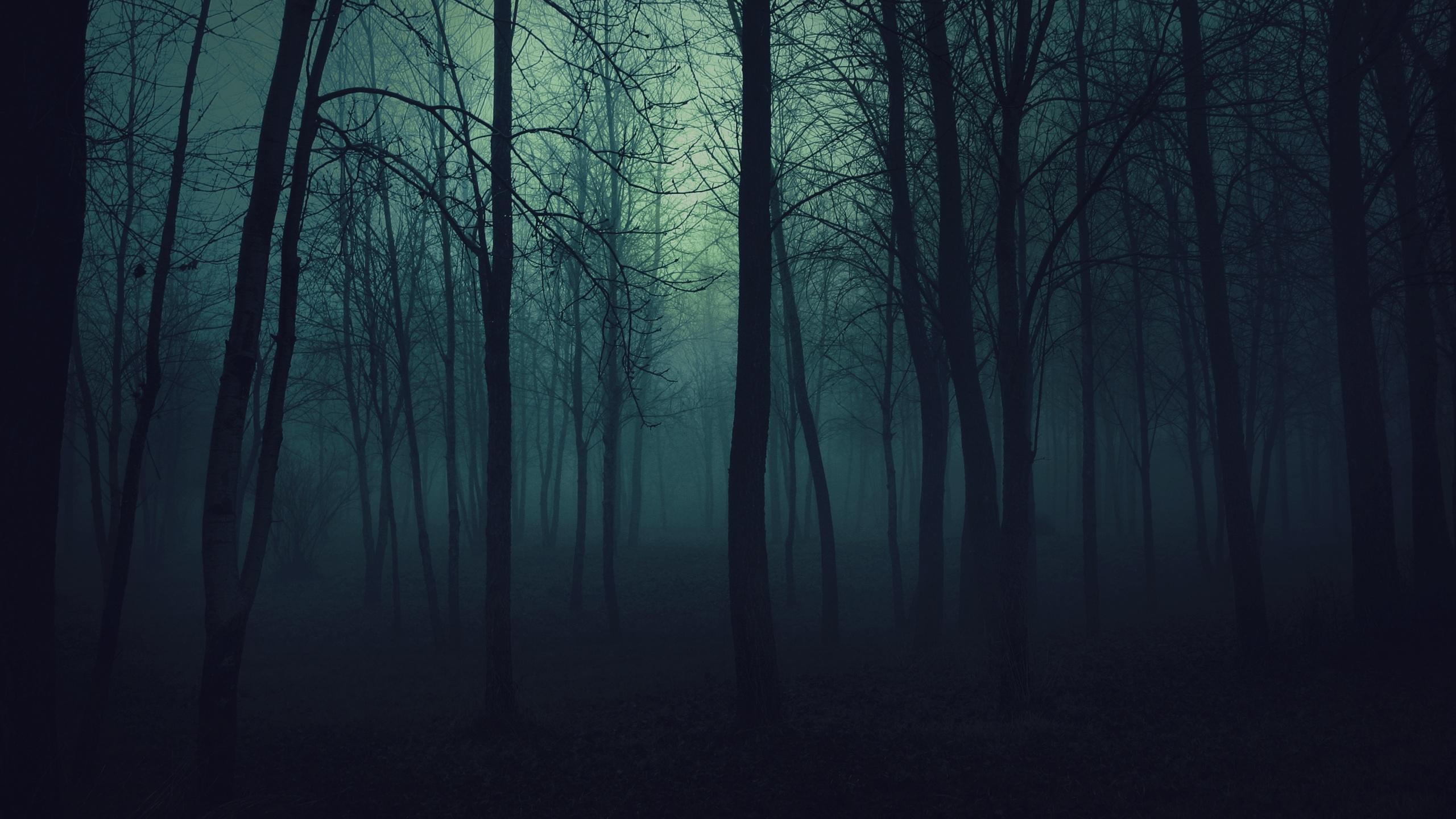 Hình nền khu rừng tăm tối