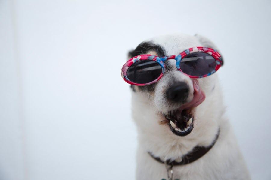 Ảnh chó cute hài hước