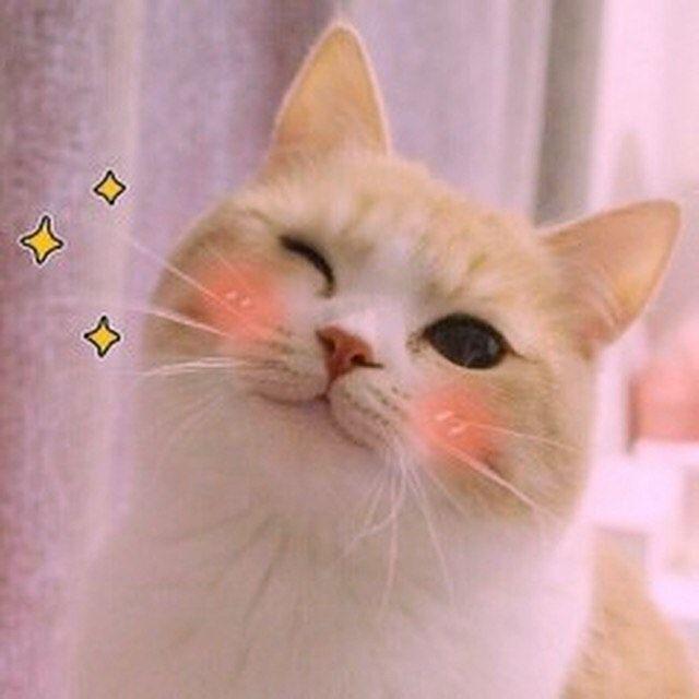 Ảnh mèo cute cực đẹp