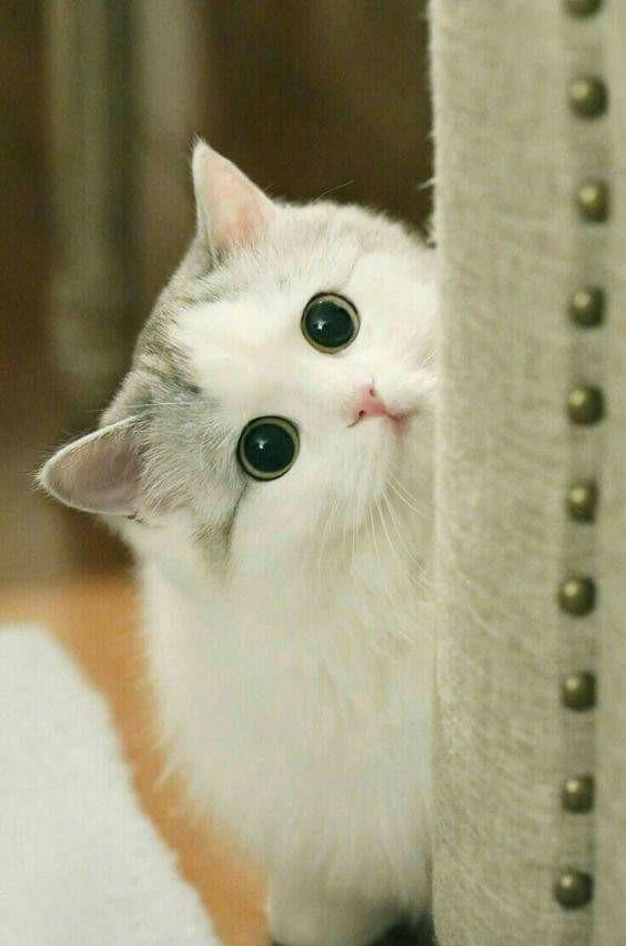 Ảnh mèo cute dễ thương