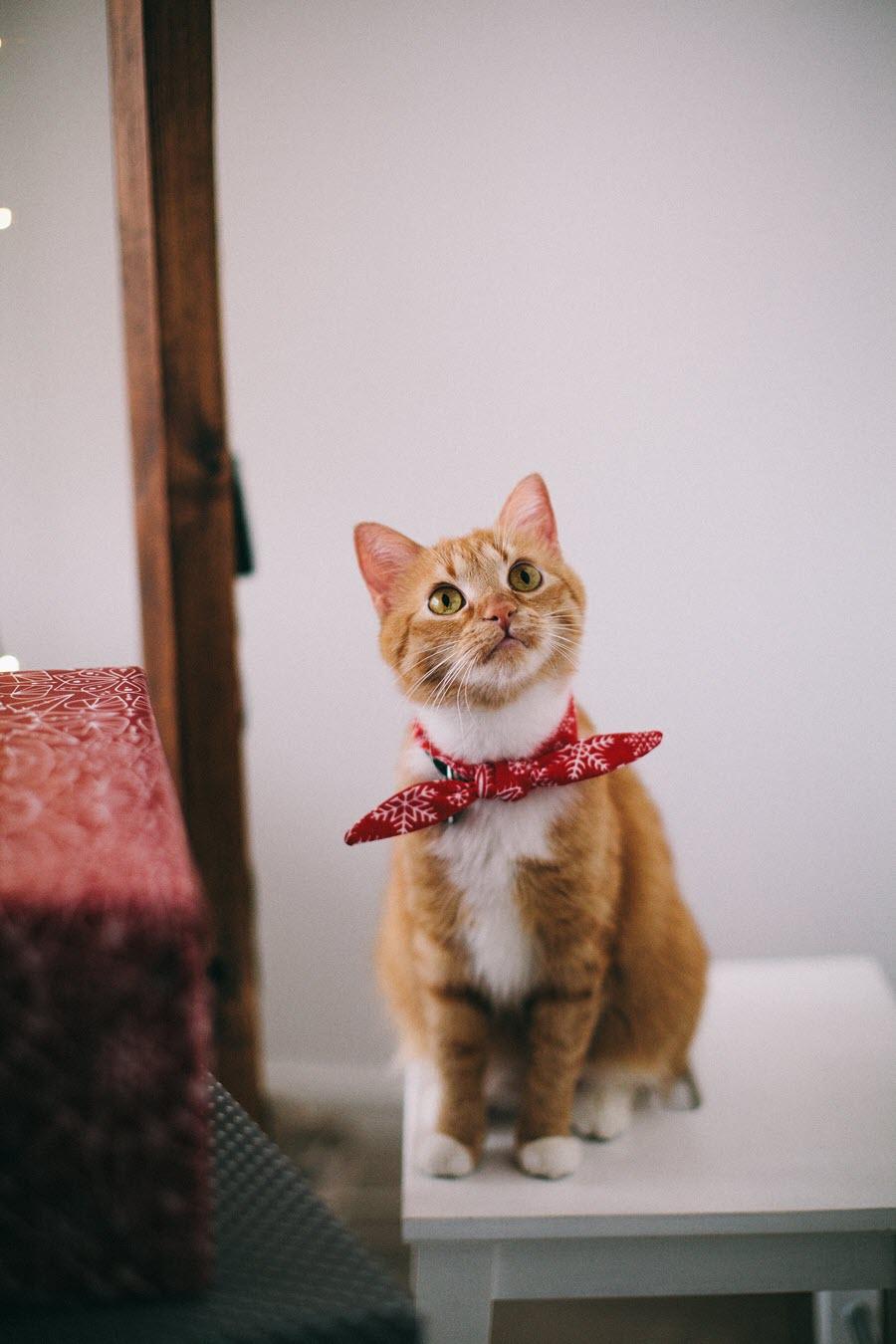 Ảnh mèo dễ thương