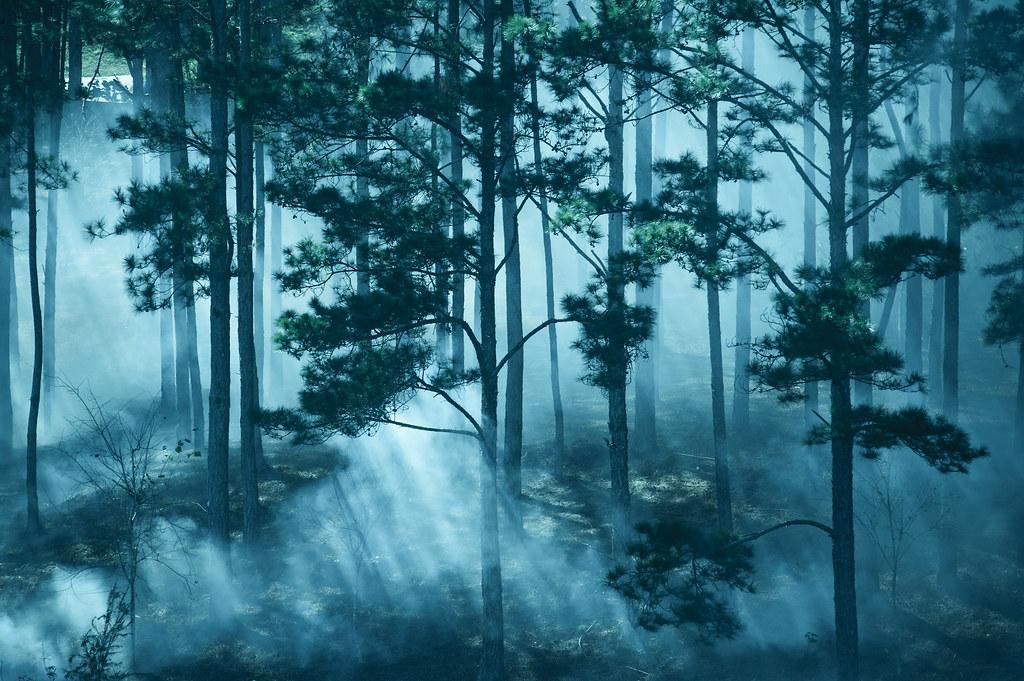 Hình ảnh buồn phong cảnh trong rừng