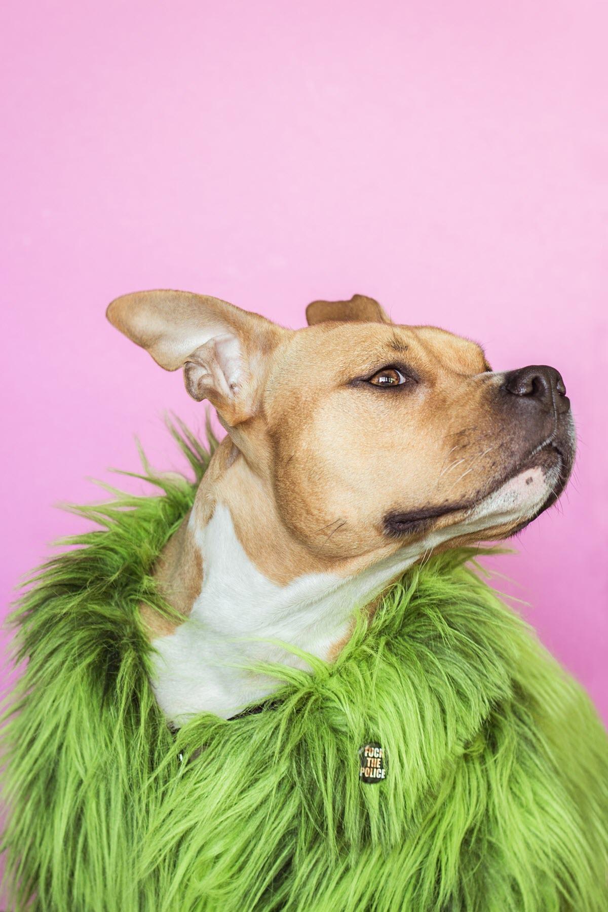 Hình ảnh chó đáng yêu