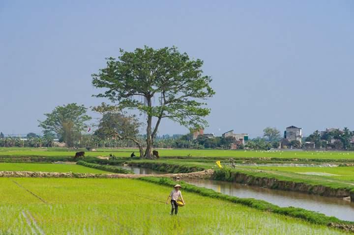 Hình ảnh đẹp làng quê bình yên