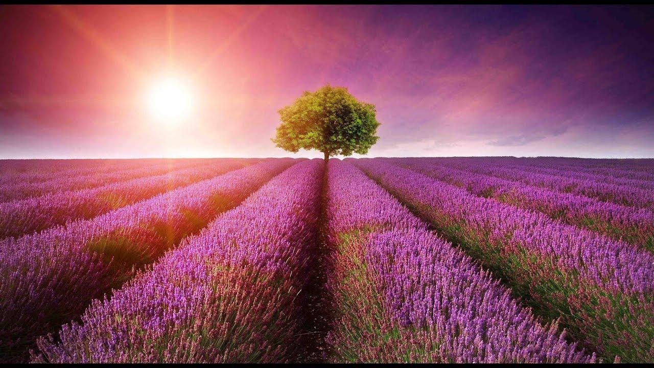 Hình ảnh đẹp và bình yên