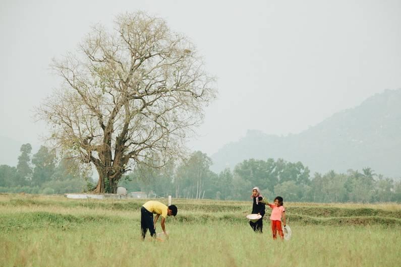 Hình ảnh làng quê bình yên