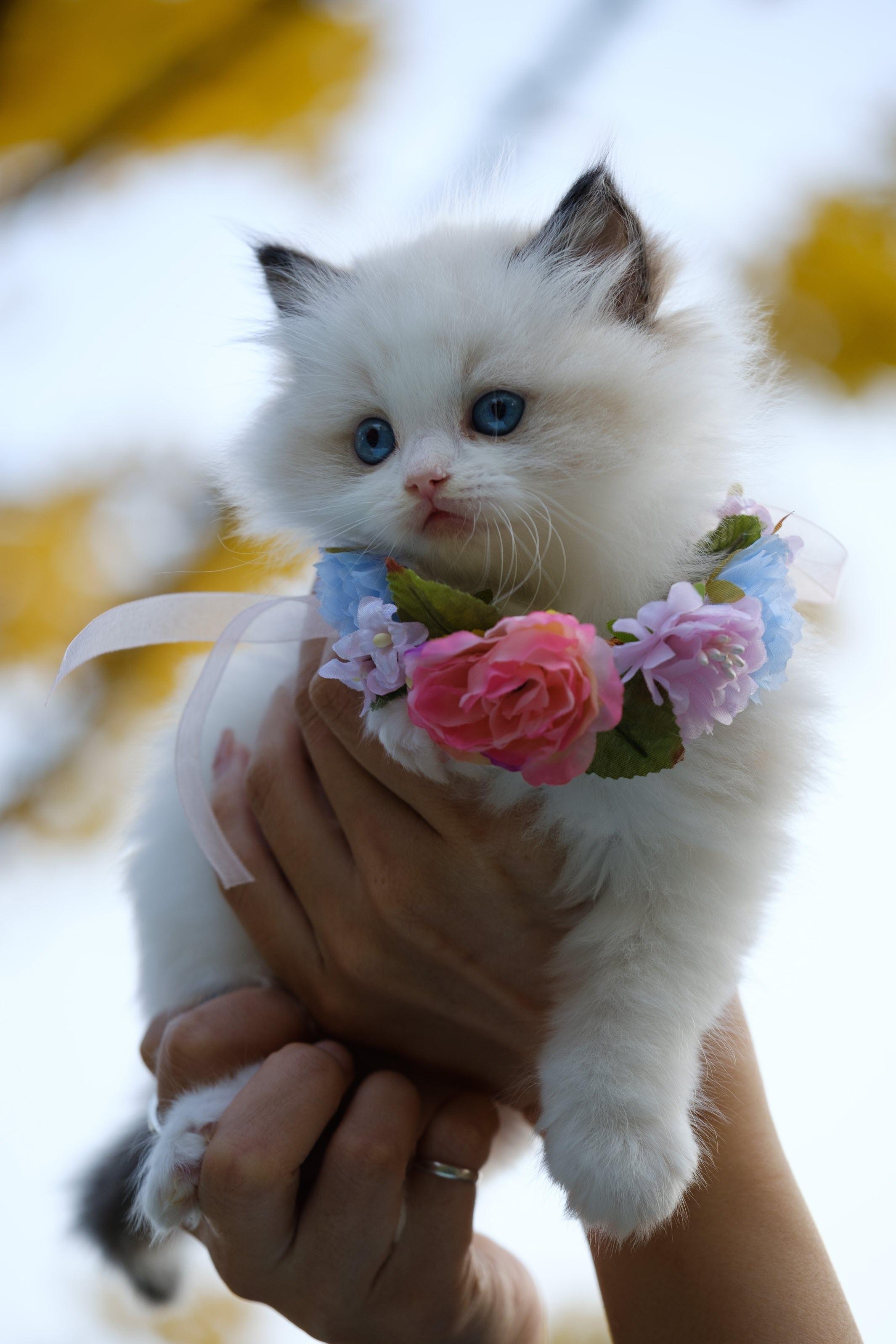 Hình ảnh mèo con đáng yêu