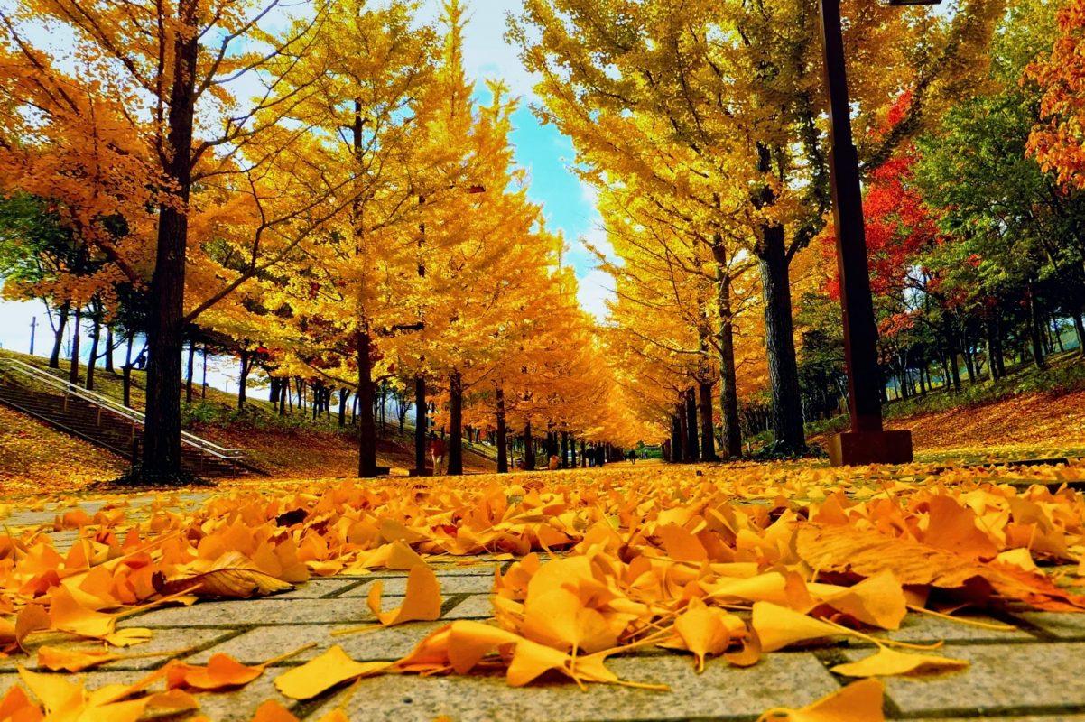 Hình ảnh phong cảnh mùa thu buồn