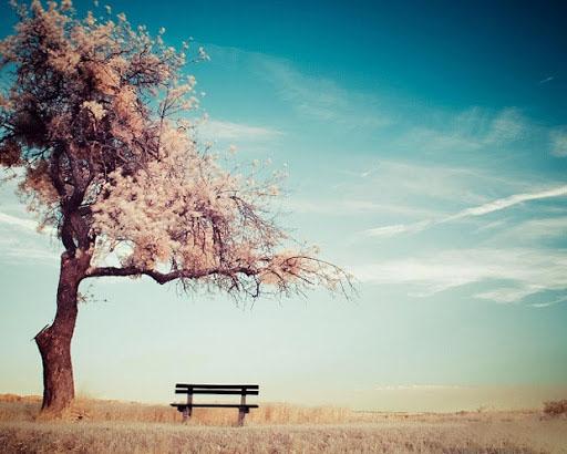 Hình ảnh phong cảnh tâm trạng buồn mà đẹp