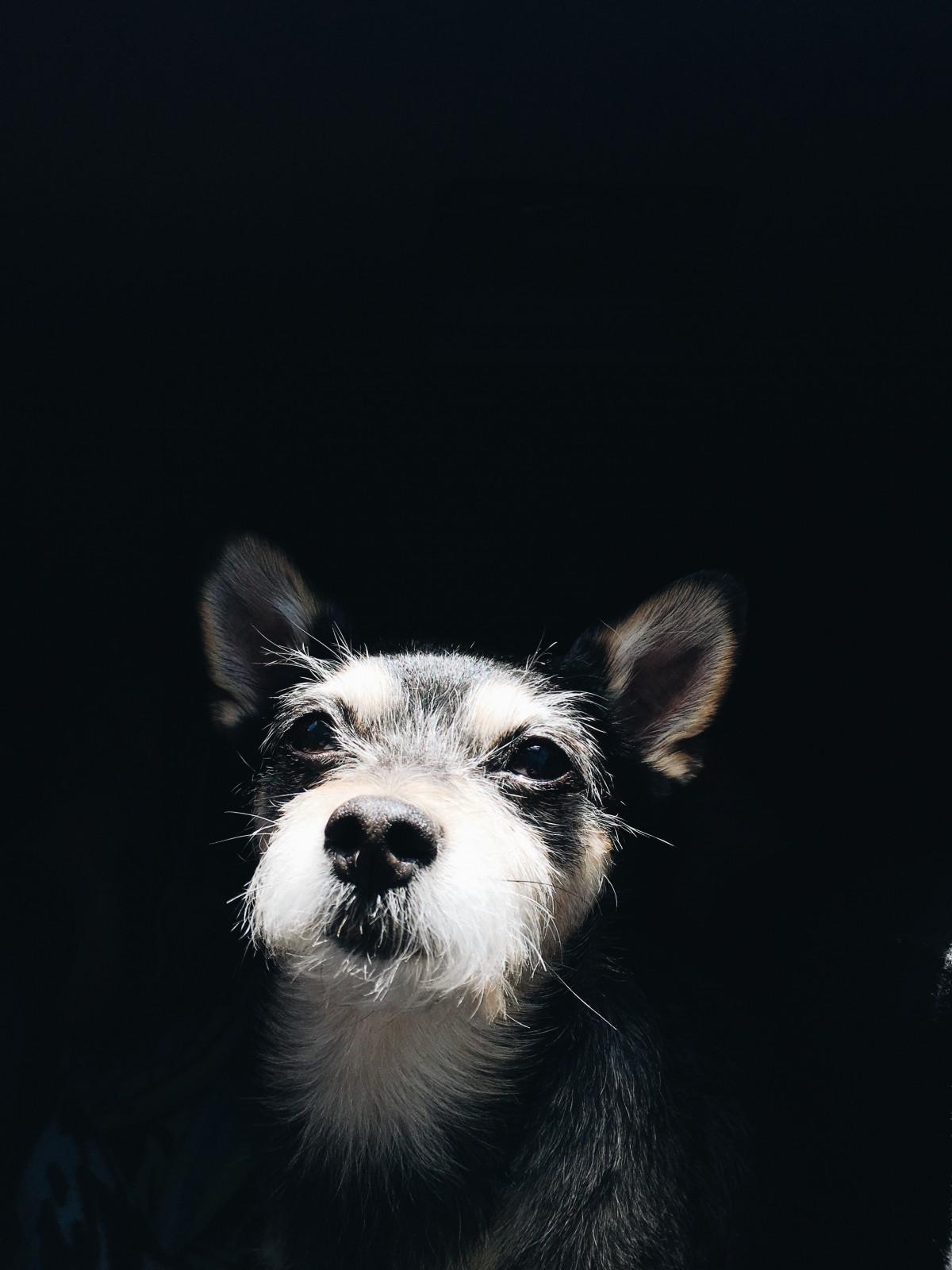 Hình ảnh đen trắng cho điện thoại chú chó lông xù