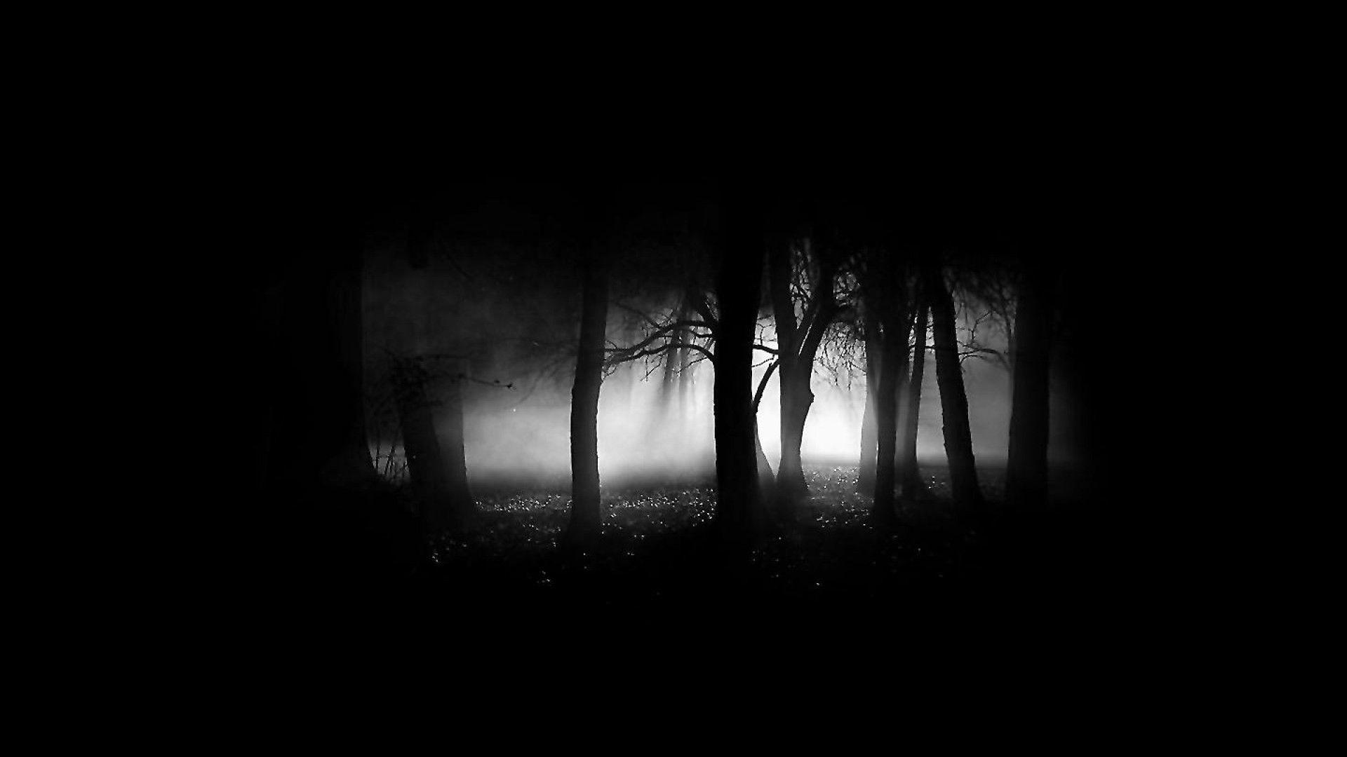 Hình nền máu tính đen trắng khu rừng bị ma ám