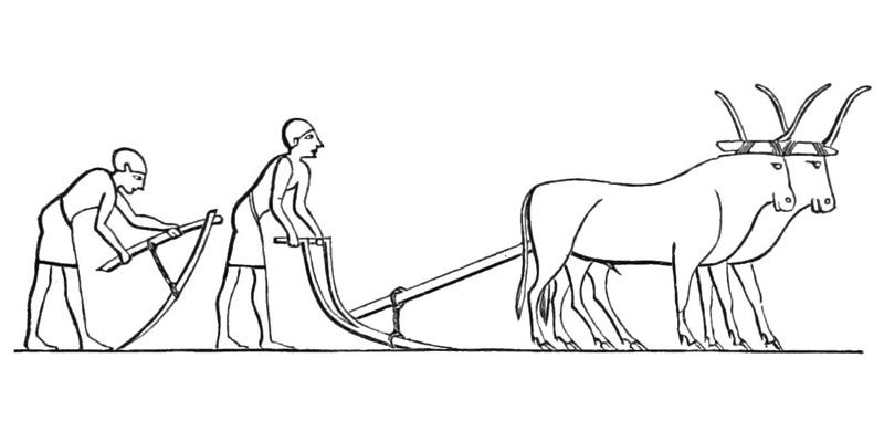 Tranh tô màu bác nông dân kéo cày