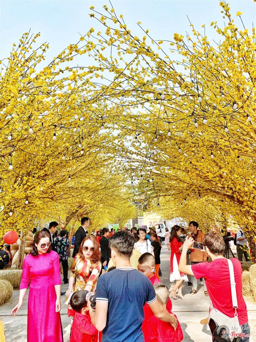Hình ảnh dãy phố hoa mai vàng vàng rực cực đẹp