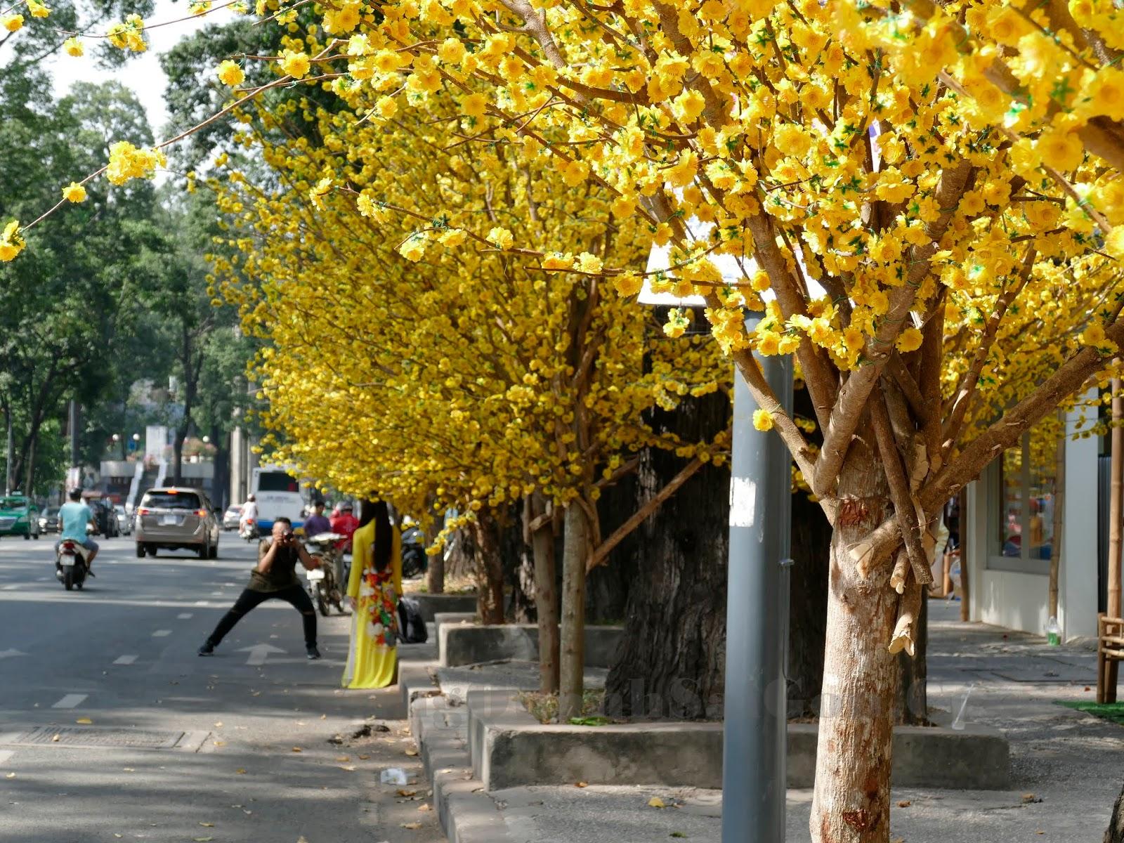 Hình ảnh dãy phố hoa vàng rất đẹp