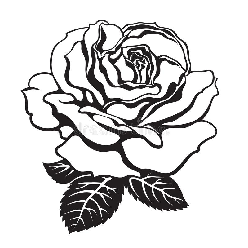 Tranh vẽ tô màu hoa hồng cho bé đẹp