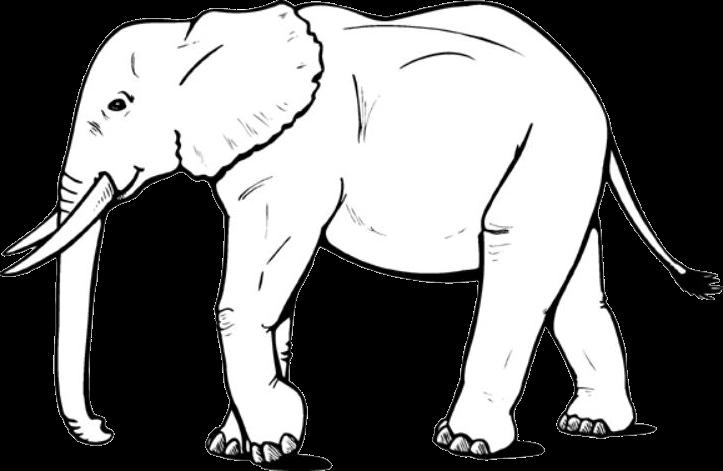 Tranh voi chân dài tới nách