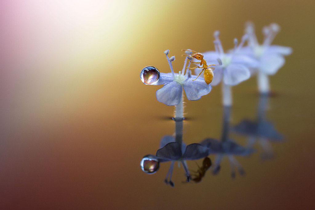 Ảnh giọt sương trên cánh hoa