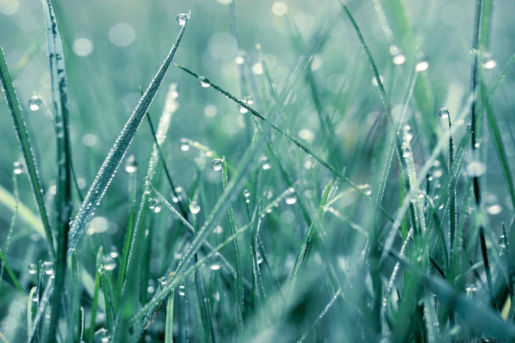 Ảnh giọt sương trên cỏ