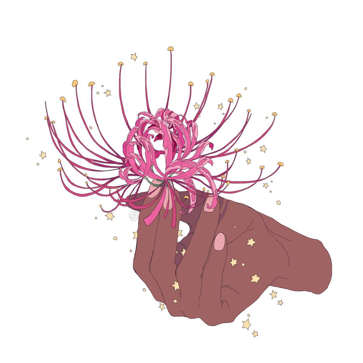 Ảnh hoa bỉ ngạn vẽ đẹp nhất