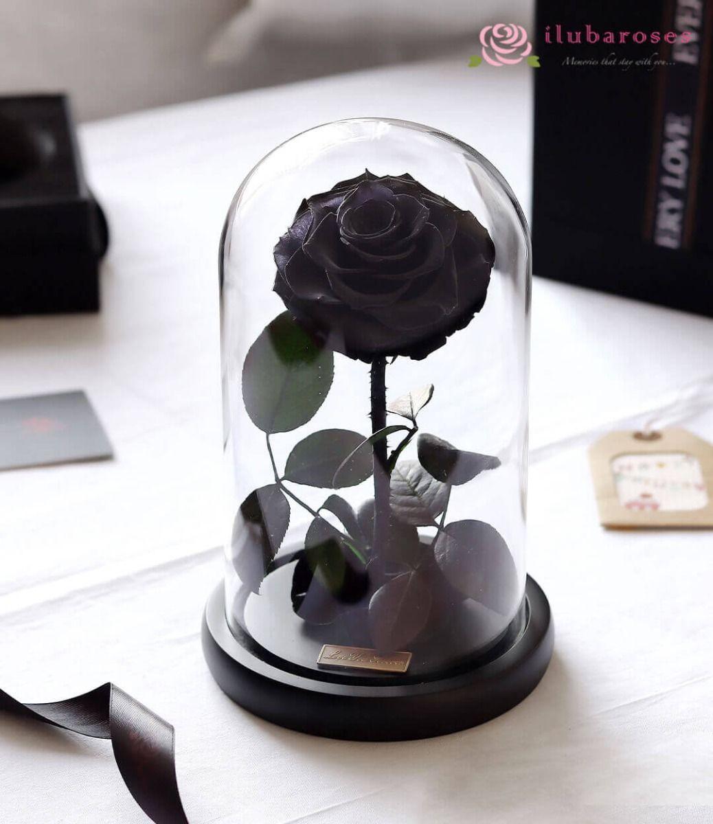 Cành hoa hồng đen trong lồng kính cực đẹp
