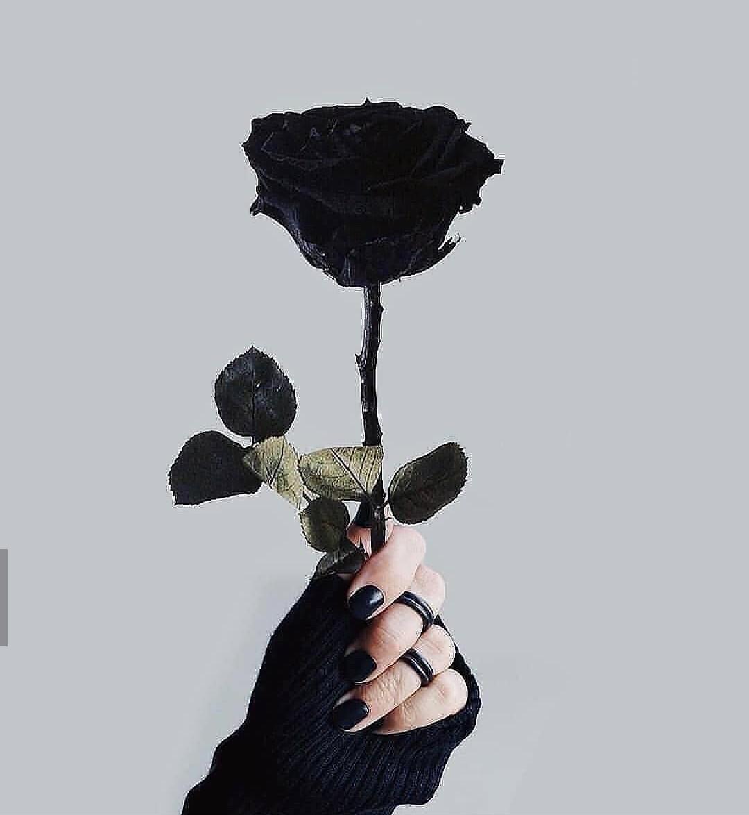 Hình ảnh cầm cành hồng đen xinh tươi