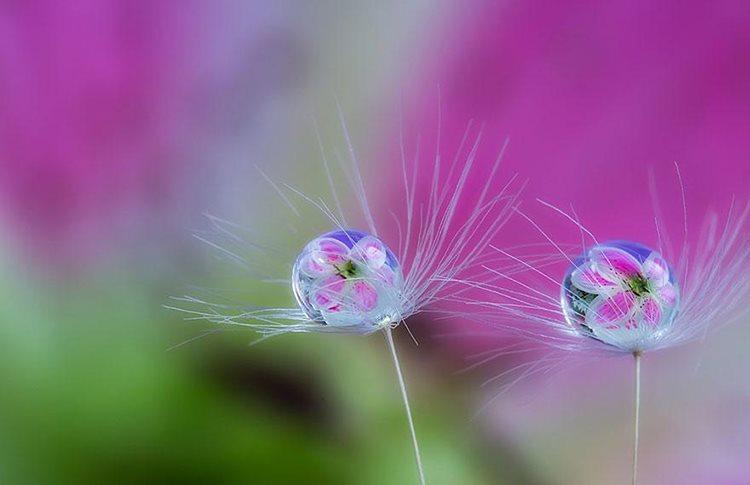 Hình ảnh giọt sương trên cánh hoa