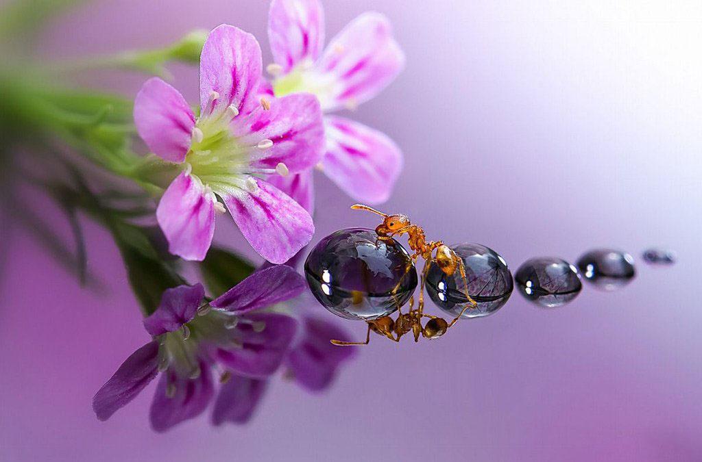 Hình ảnh giọt sương với con kiến