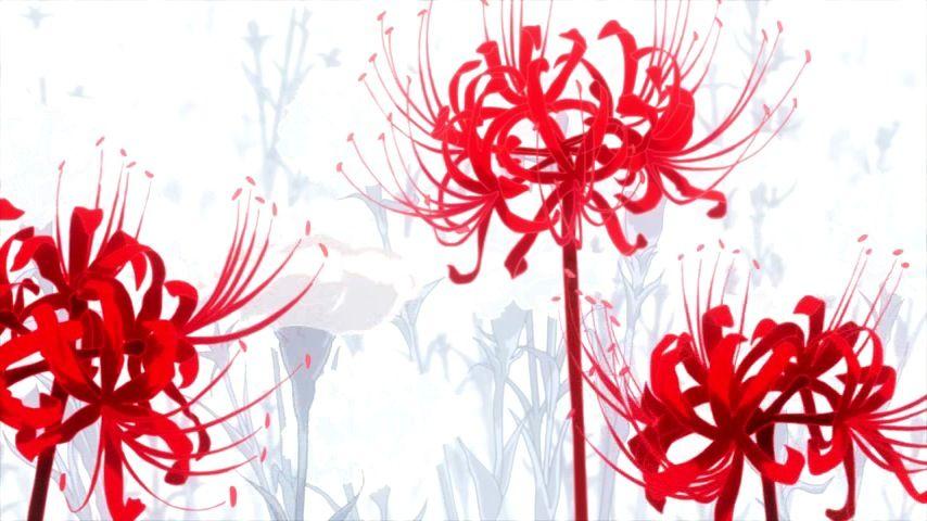 Hình ảnh hoa bỉ ngạn anime đẹp nhất