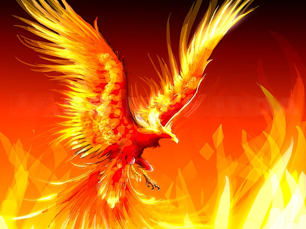 Hình ảnh phượng hoàng lửa