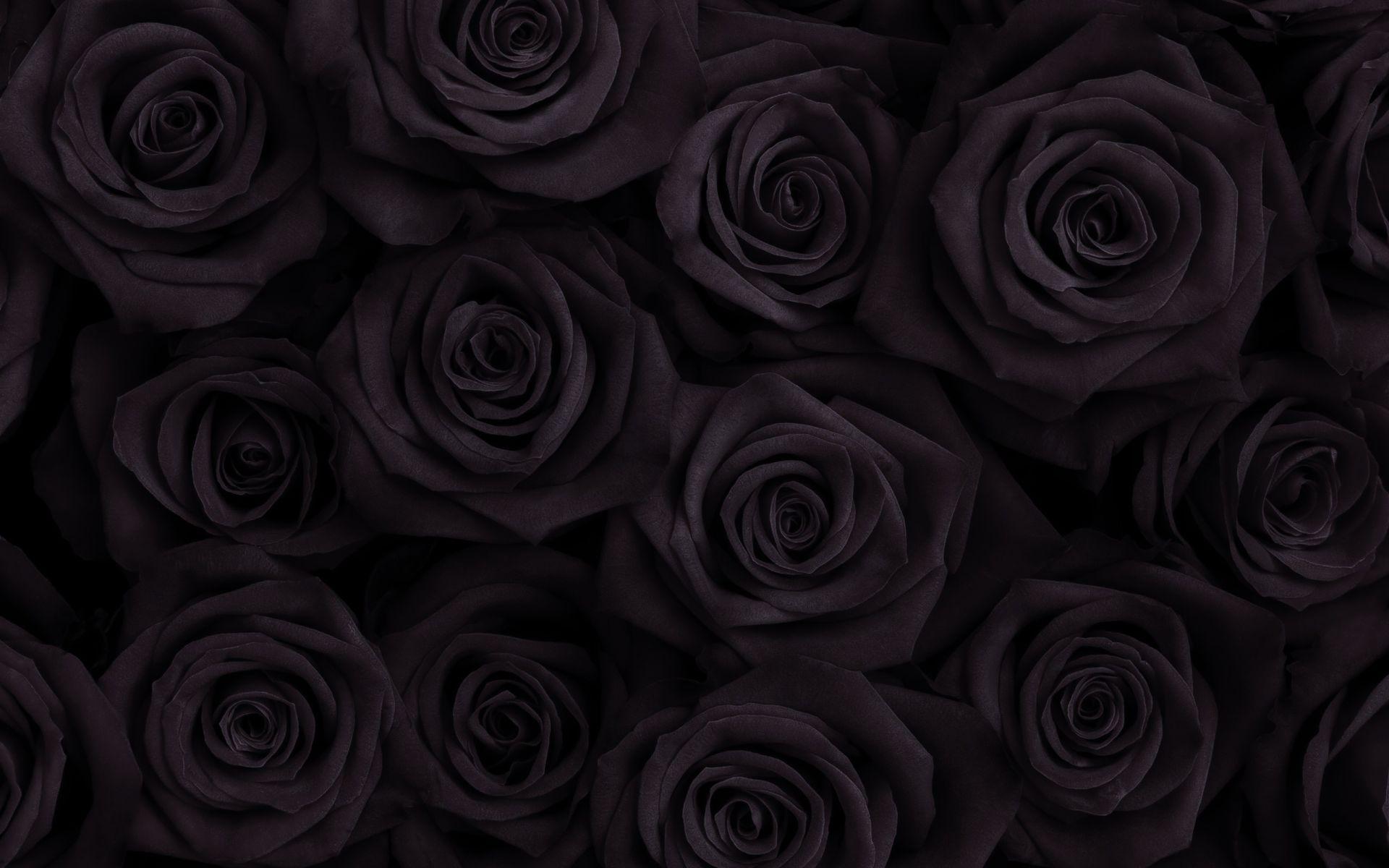 Hình những bông hồng đen xếp sát nhau