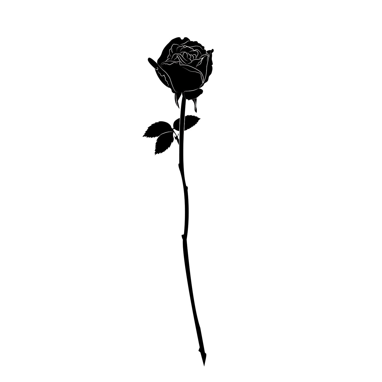 Hình vẽ hoa hồng đen rất đẹp