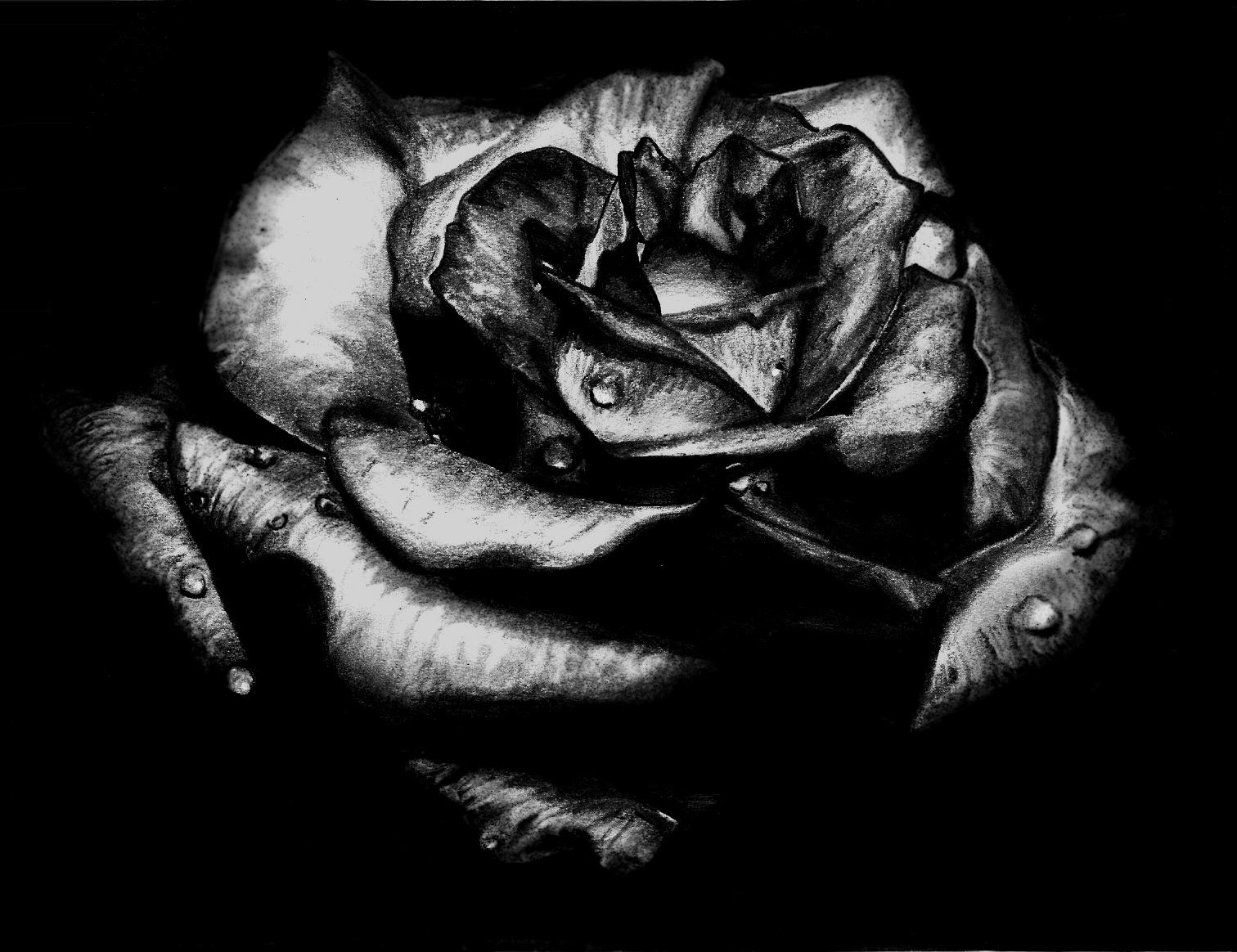 Hoa hồng đen rất đẹp