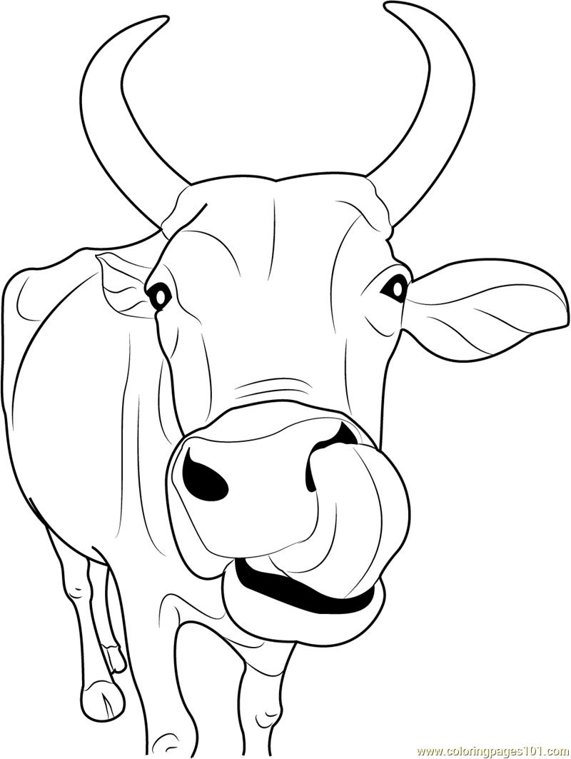 Tranh tô màu con bò ngộ nghĩnh