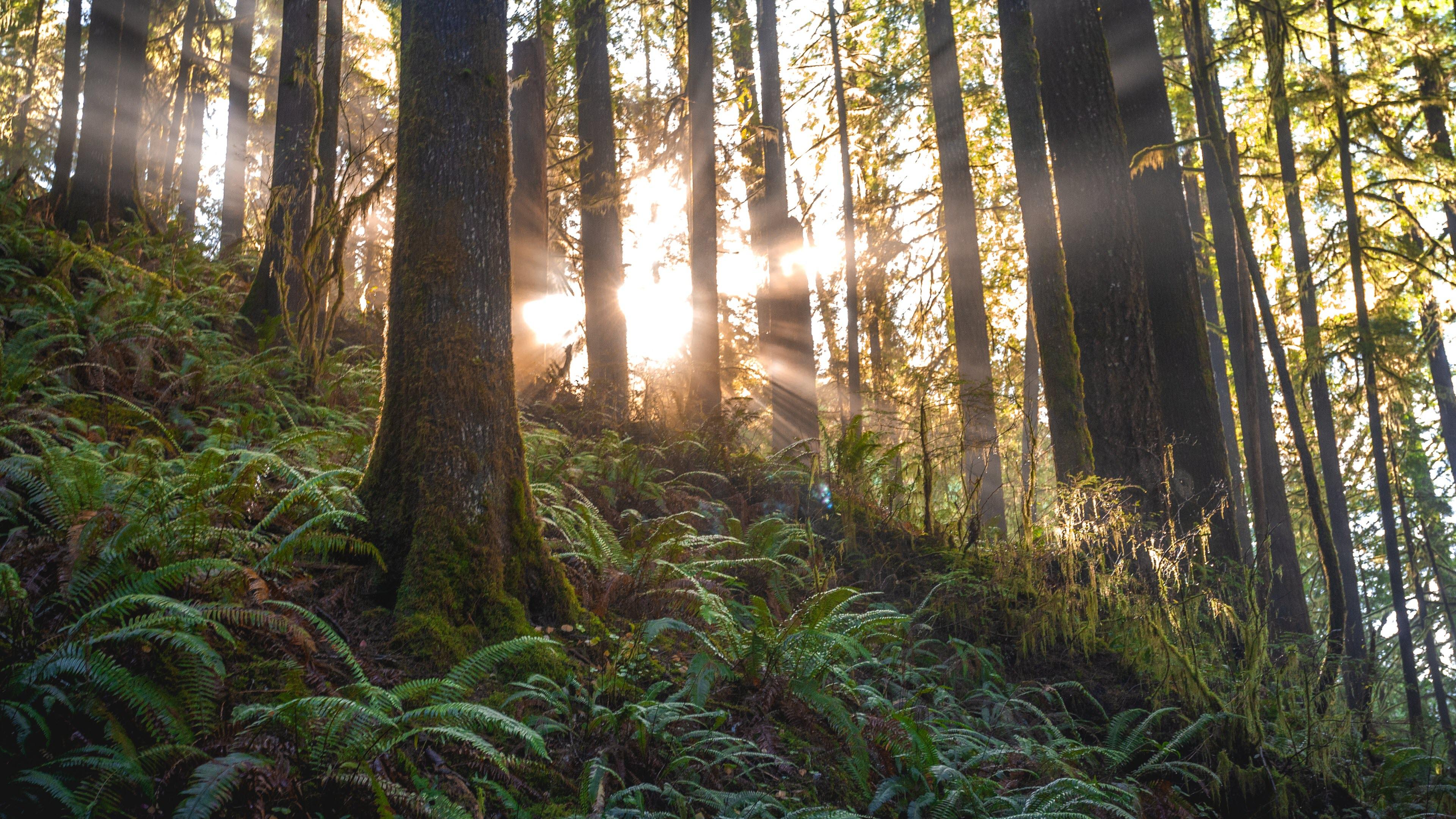 Hình nền khu rừng 4K