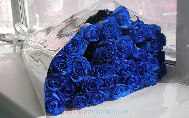 Hình ảnh hoa hồng xanh đẹp