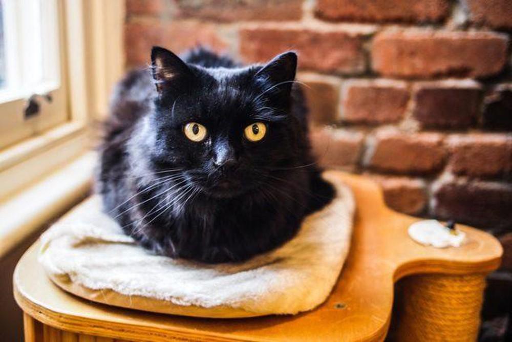Ảnh con mèo đen