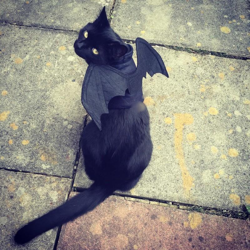 Ảnh mèo đen dễ thương