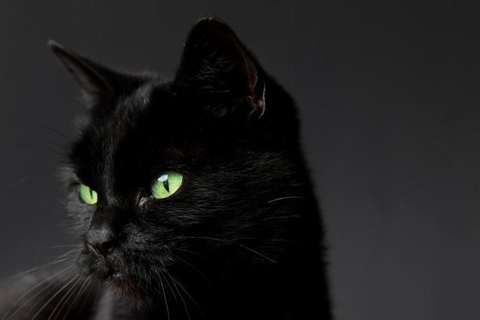 Ảnh mèo đen tuyền đẹp